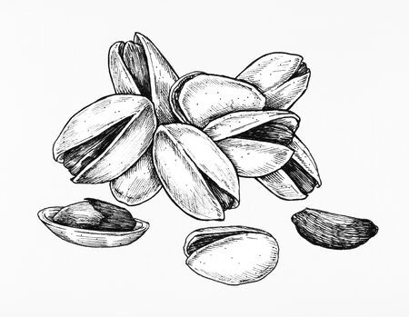 Hand drawn pistachio isolated on white background