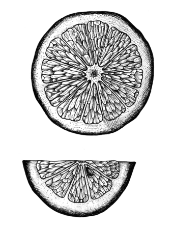 Hand drawn slice of lemon Imagens - 99963086