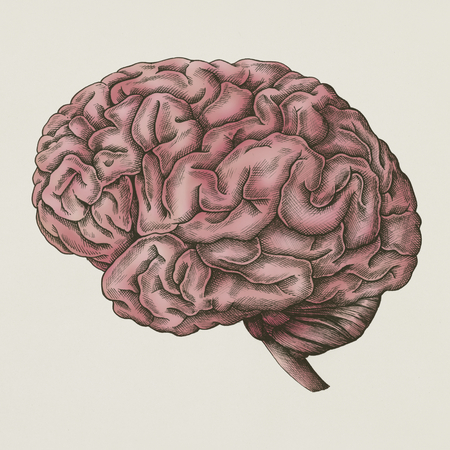 Brain internal organ vintage style illustration