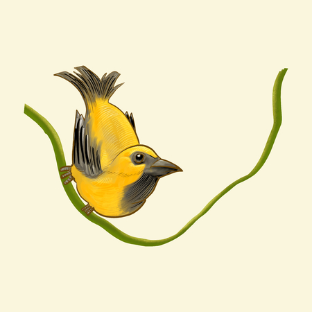 Hand drawn golden finch isolated Banco de Imagens - 99963533
