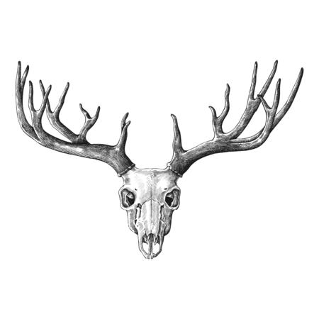 手描き鹿の角隔離 写真素材