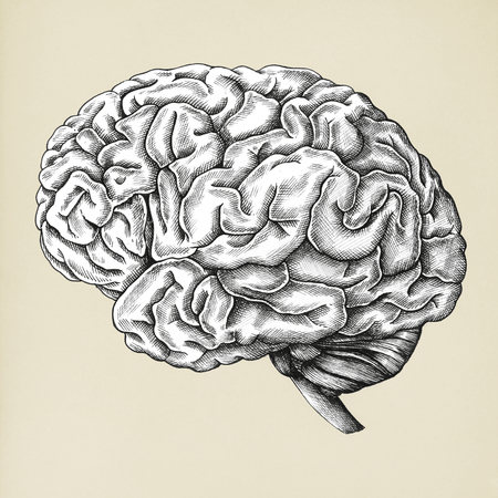 Hand drawn brain isolated on background