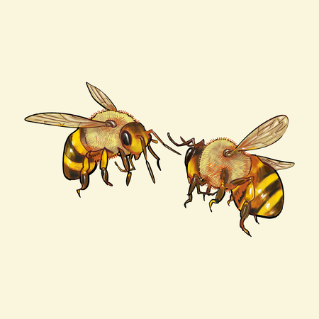 Hand drawn bee isolated on yellow background Фото со стока - 99963706