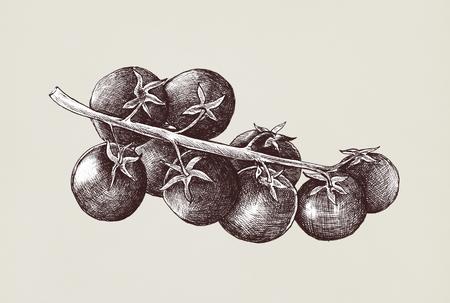 Illustration of fresh tomatoes Stock Illustration - 115608006
