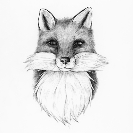 Hand drawn fox isolated on background
