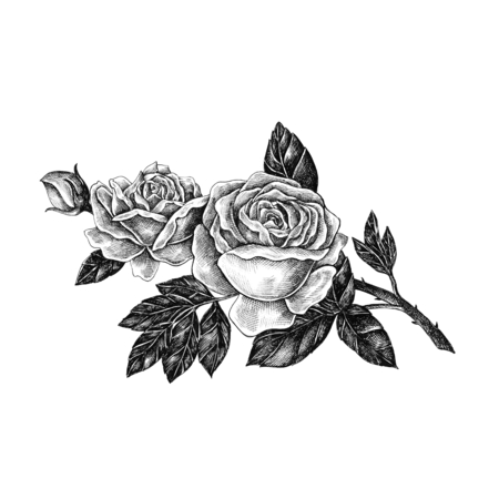 Illustration of beautiful roses