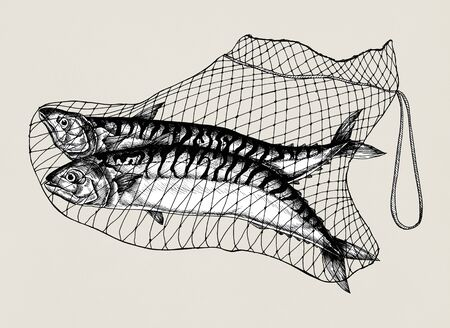 Hand drawn catched mackerels on the net Foto de archivo - 99975103