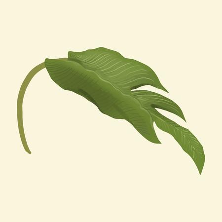 Hand drawn plant leaf isolated Banco de Imagens - 100100395
