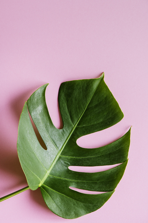 Tropical leaf on pink background Stock Photo