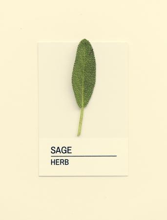Sage leaf on white paper Stok Fotoğraf