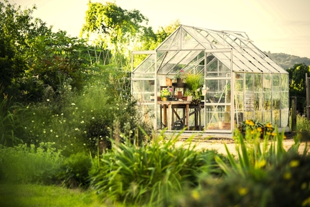 Greenhouse in a lush garden