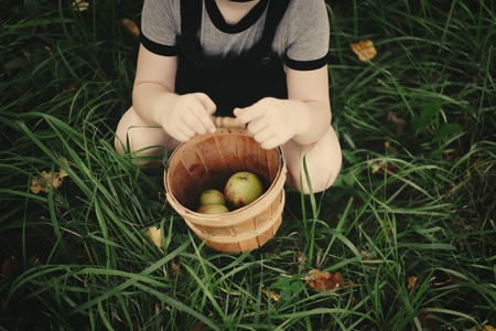 Young girl picking up some apples
