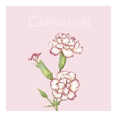 Hand drawn carnation flower illustration Stock Photo