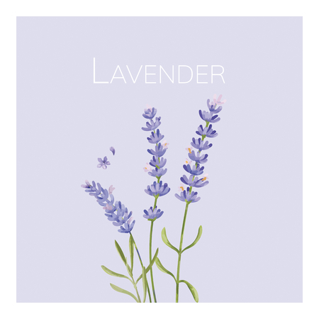 Hand drawn lavender flower illustration