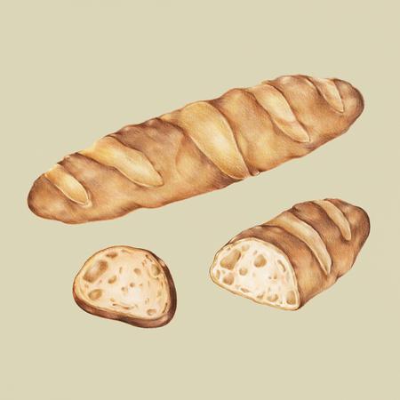 Freshly baked baguette hand-drawn illustration Stock Photo
