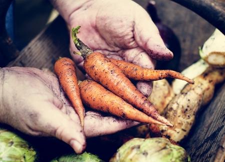 A person handling carrots 写真素材