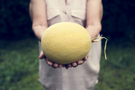 Hands holding honeydew organic produce from farm Фото со стока