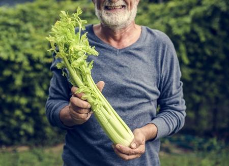 Man holding kale organic produce from farm