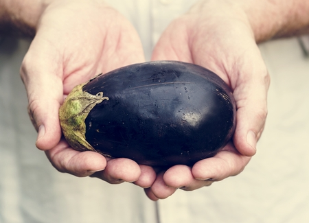 Fresh eggplant vegetable