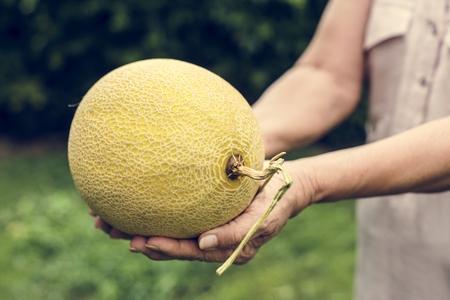 Fresh honeydew fruit