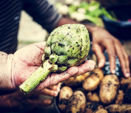 A person handling artichoke