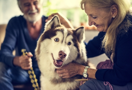 Closeup of senior woman petting siberian husky