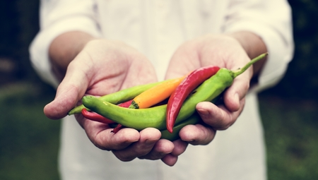 Hands holding chilli organic produce from farm