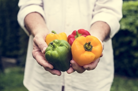 Hands holding bell pepper organic produce from farm