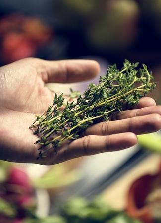Fresh thymes herb