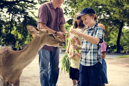 Young caucasian boy feeding the deer at the zoo 스톡 콘텐츠