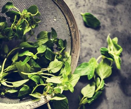 Closeup of fresh organic sweet basil leaves Banco de Imagens