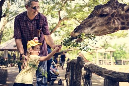 Young girl feeding the giraffe at the zoo