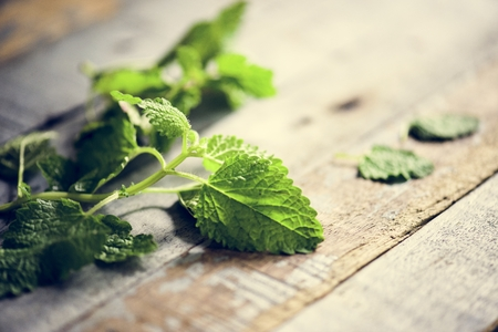 Peppermint leaves cooking herb