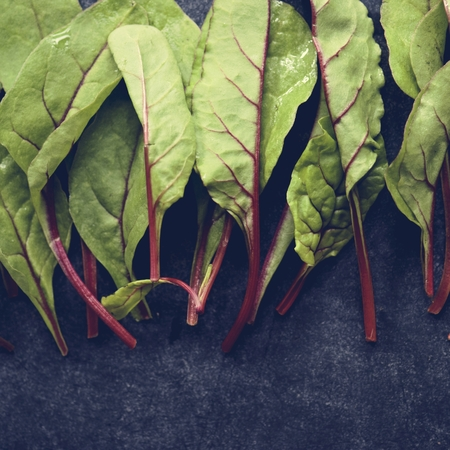 Macro shot of baby beet greens vegetable