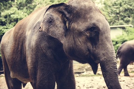 Closeup of elephant at the zoo Stock Photo