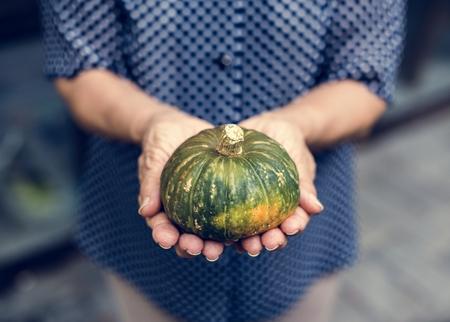 Fresh small green pumpkin Imagens
