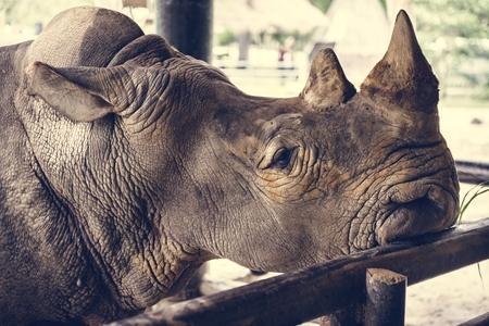 Closeup of rhino at the zoo Stock Photo
