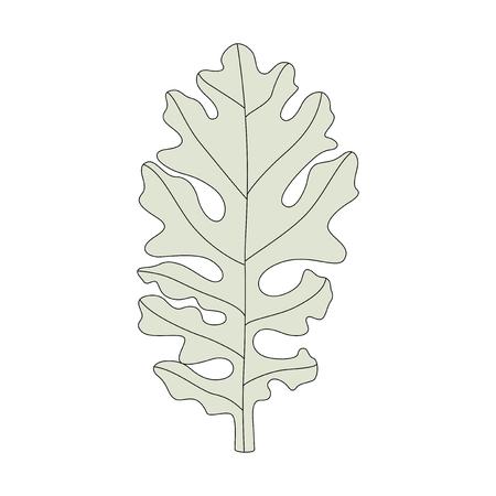 Illustration of a dusty miller leaf