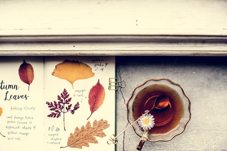 Aerial view of pressed leaves collection book with tea cup