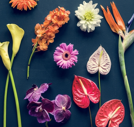 Colorful tropical flowers on black background 写真素材