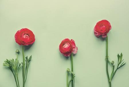 Red flowers on green background Reklamní fotografie