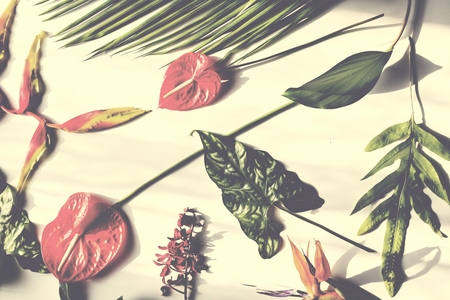 Tropical flowers and leaves on white background Reklamní fotografie