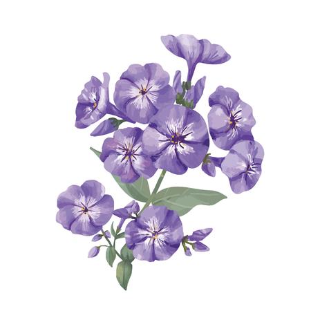 Hand drawn purple phlox flower illustration