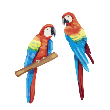 Hand drawn pair of parrots