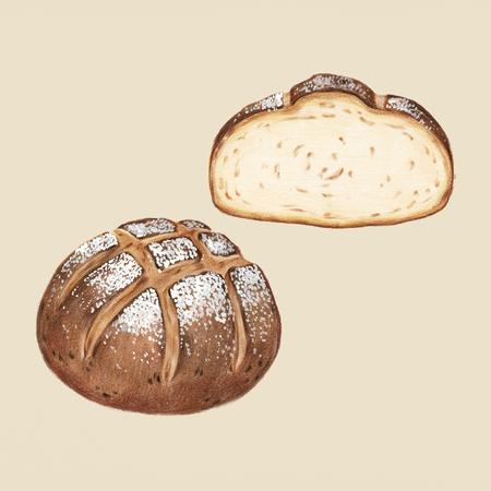 Freshly baked sourdough bread hand-drawn illustration
