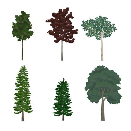 Raccolta di illustrazioni di alberi di pino e foglia