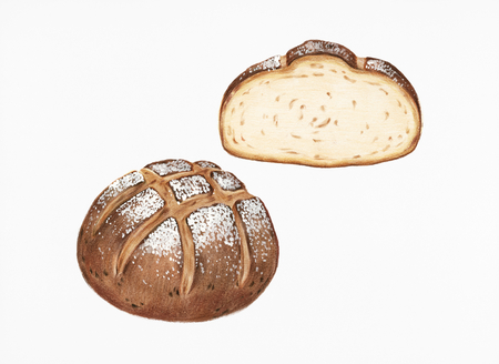 Freshly baked sourdough bread hand-drawn illustration