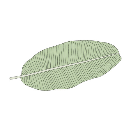 Illustration of a banana leaf Stok Fotoğraf
