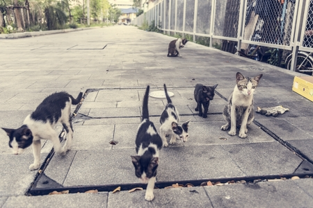 Group of cute street cats and kittens