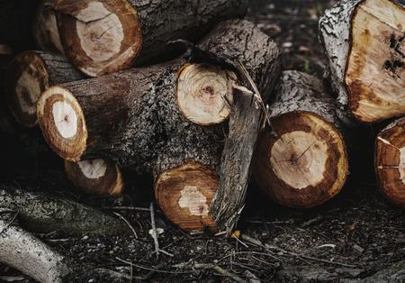 Wood log lumber textured wallpaper